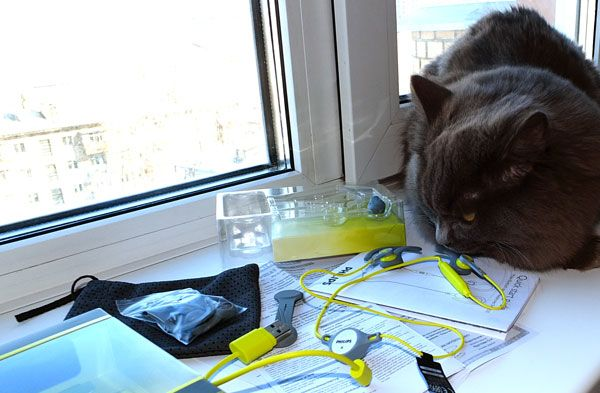 Кот и наушники