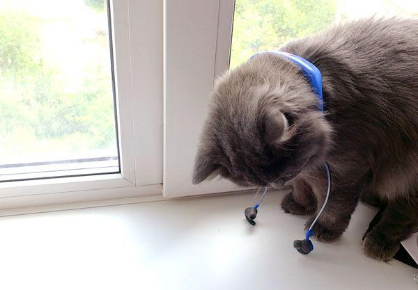 Кот примеряет аксессуар